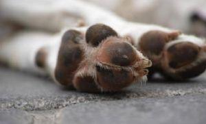 Casos de maus-tratos a animais mais que dobraram durante a pandemia (Crédito: Reprodução)