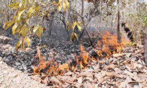 Homem é flagrado ateando fogo às margens do rio Coxipó e acaba preso (Crédito: Reprodução)