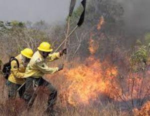 Ibama determina que brigadas de combate a incêndio retornem às atividades (Crédito: REPRODUÇÃO)