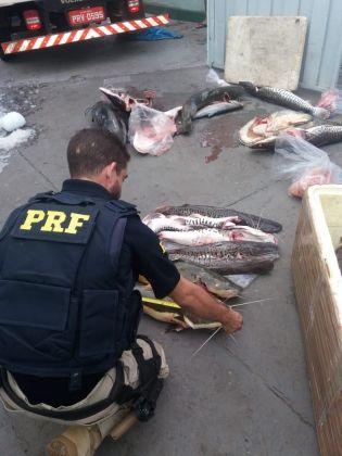 Polícia apreende 203 kg de pescado irregular em caminhão baú