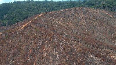 Pressão do agronegócio e reação internacional fazem governo rever atitude sobre desmatamento