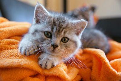 Proibição de animais de estimação em condomínio chega até o STJ