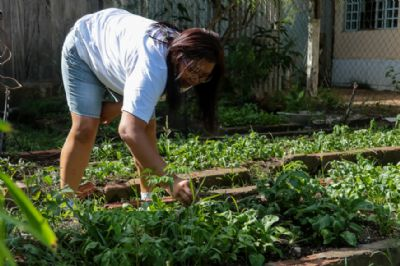 Escola cultiva horta orgânica e produz mais de 10 variedades