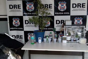Estufa com plantação de maconha é apreendida dentro de guarda-roupa de estudante em Cuiabá
