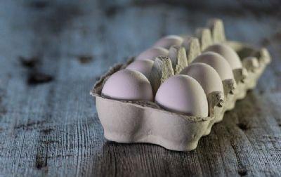 Ovo aumenta ou não o colesterol? Mitos e verdades sobre a gordura