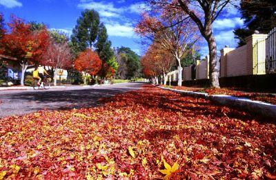 Outono começa nesta quarta-feira; veja a previsão para cada região do Brasil