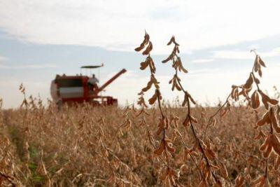 Agropecuária tem o pior resultado entre todos os setores da economia