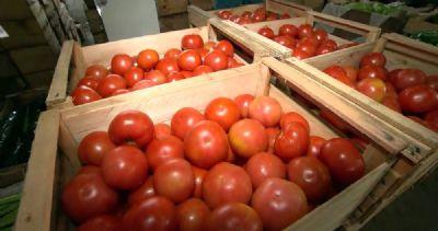 Preço do tomate sobe mais de 70% em Mato Grosso, aponta IBGE