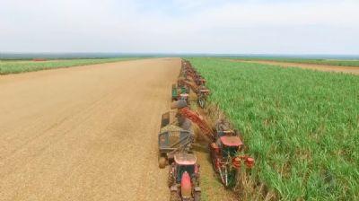 Cresce o mercado de drones para agricultura em Mato Grosso