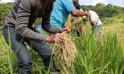Governo fixa medidas para garantir a segurança alimentar da população