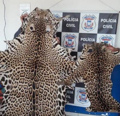 Casal tenta fugir da polícia e é preso com peles de onça adulta e filhote