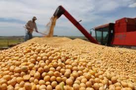 Safra mundial de soja 2017/18 deverá atingir 348 mi/ton
