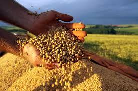 Preços da soja subiram em setembro