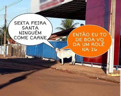 Vaca solta em rua de Tangará da Serra (MT) vira meme