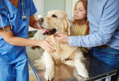 Lei sancionada pelo Estado obriga clínicas e pet shops a informar maus-tratos